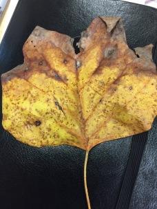 yellow-leaf