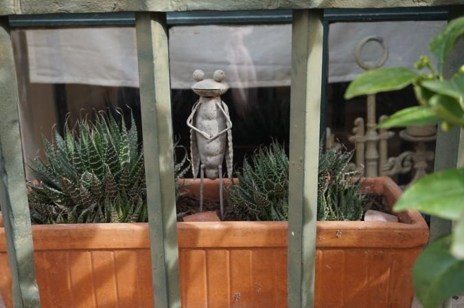 arles cicada