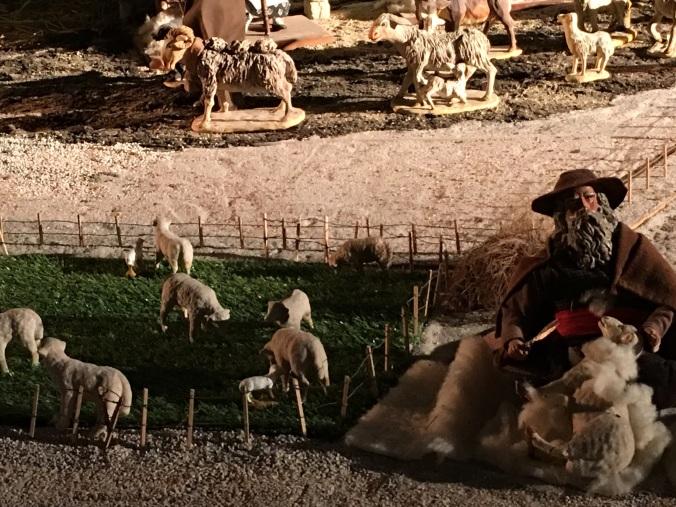 creche lambs