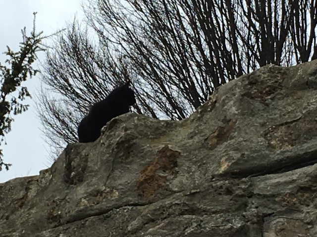 montmartre black cat
