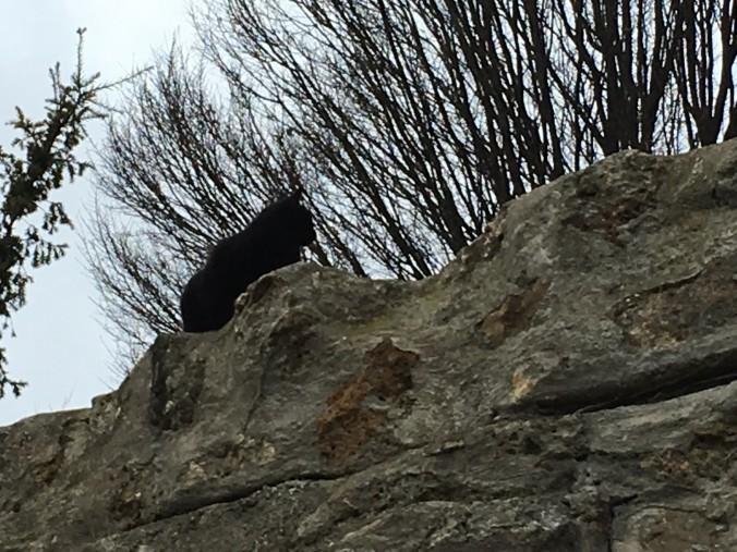 montmartre black cat