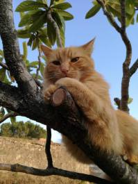 cat in tree