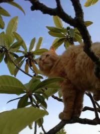cat in tree2