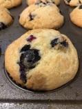 blueberry muffs